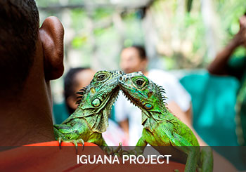 Belize Iguana Project