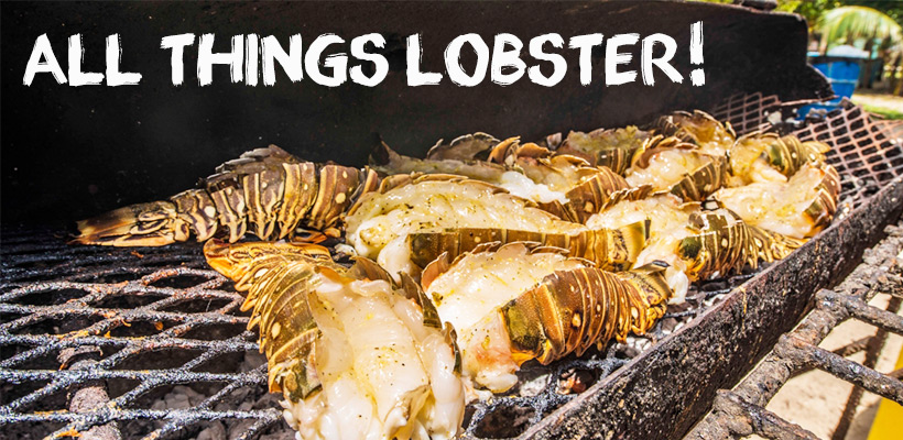 All Things Lobster! Honouring the return of this seafood delicacy