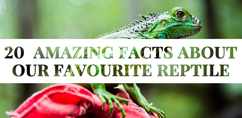 20 Cool Facts About the Green Iguana Conservation Project & Specie